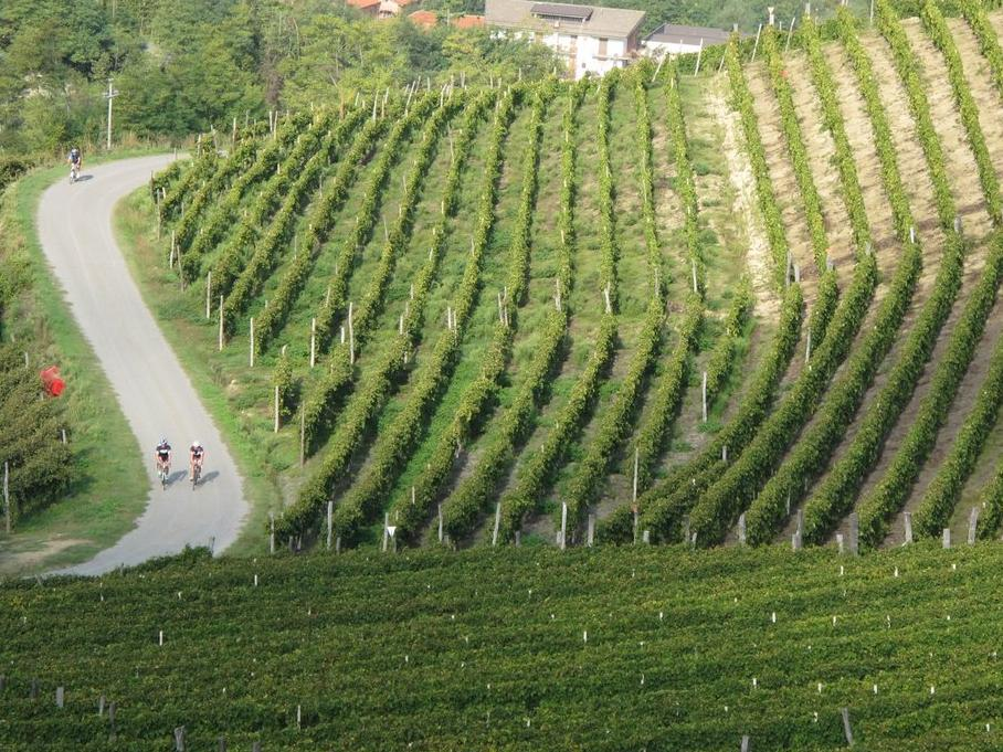 Vineyards In Piedmont 386C