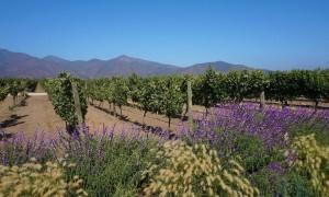 Chile Vineyard Bike Tour