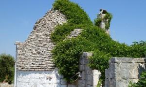 Tree Growing Over A Trullo In Puglia