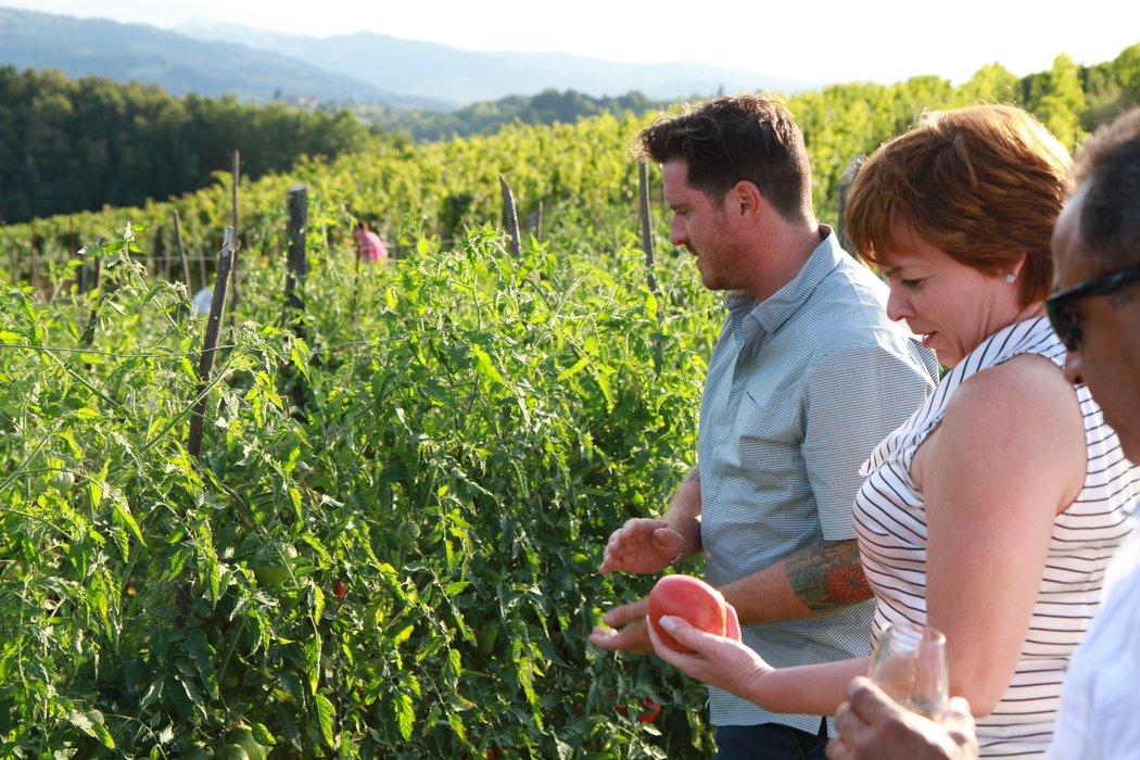 Seamus-Mullen-Picking-Produce-in-Piedmont.jpg