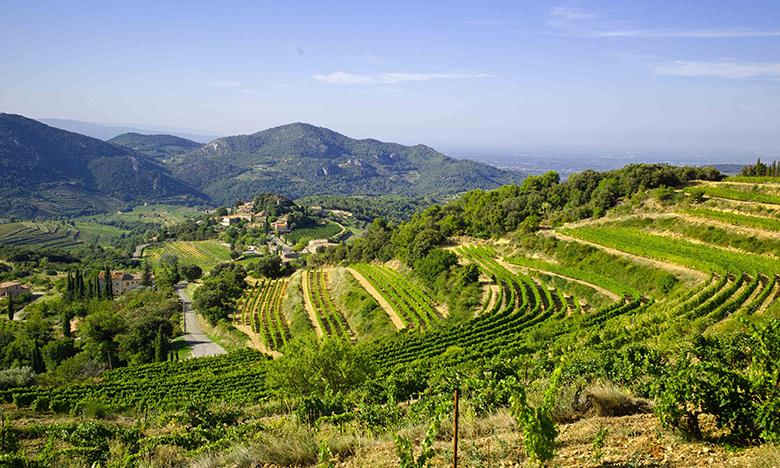 Wine Tours France  SmoothRed  Wine Tasting Holidays