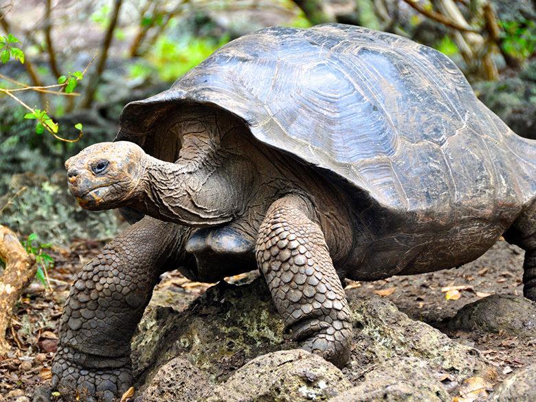 Into The Wild 10 Unique Animals Of South America Duvine