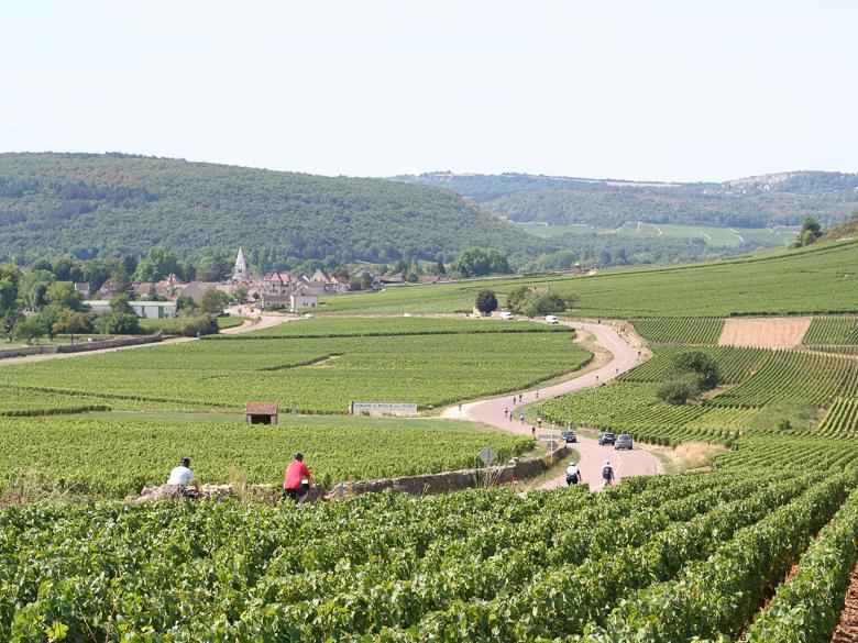 Scenic vineyards and hillside in Burgundy, France