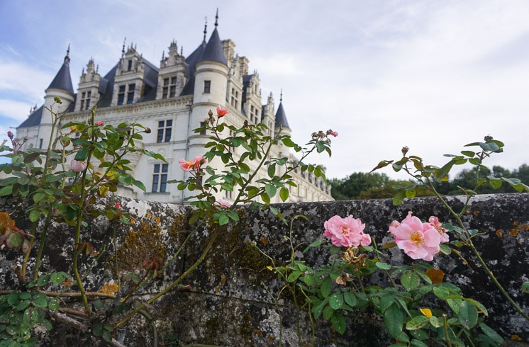 Pink roses growing on an old wall in front of La Tortiniere hotel in Veigné, France