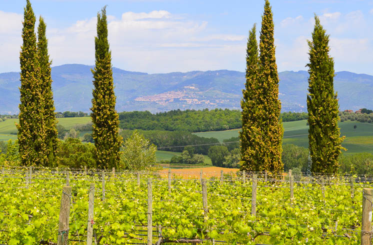 Tuscany Bike Country Inn Tours