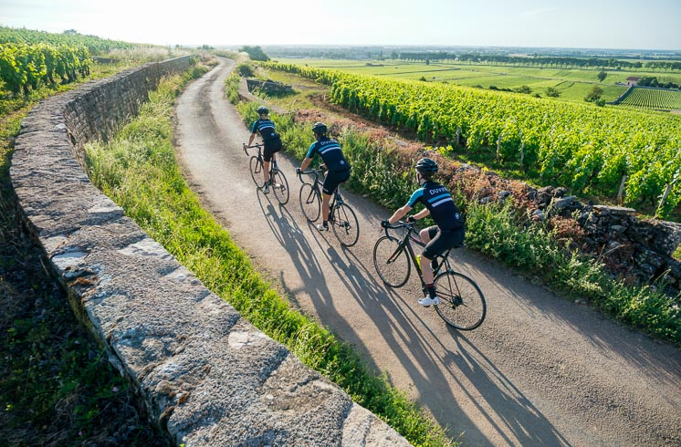 Three DuVine cyclists seen from behind while riding in the late afternoon on Burgundy's vineyard roads