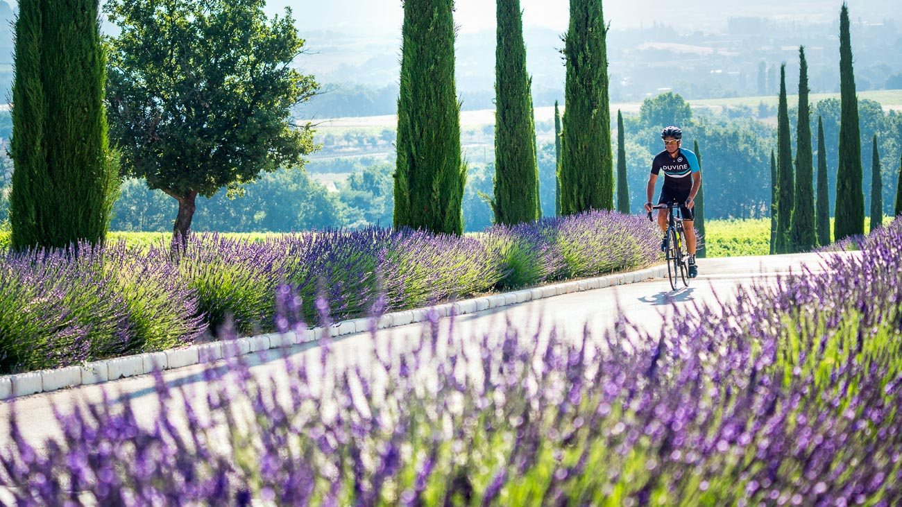 DuVine cyclist on a bike path with lavender planted on either side