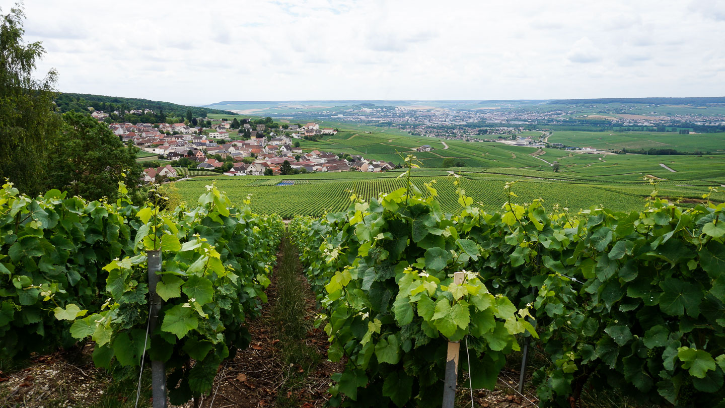 A small village nestled amidst vineyards in Champagne, with grape vines in the foreground