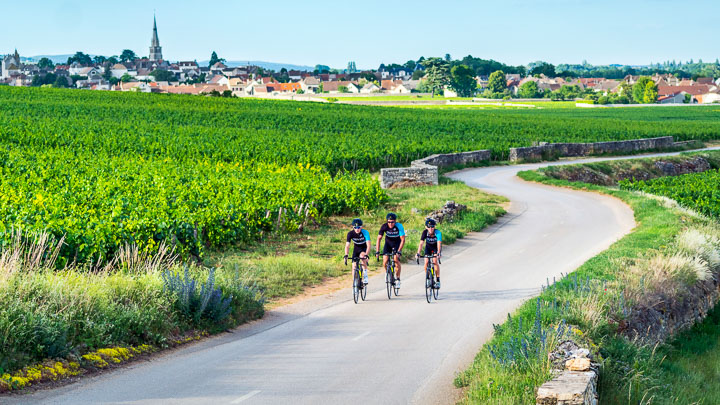 Three DuVine cyclists riding on a vineyard road in Bordeaux