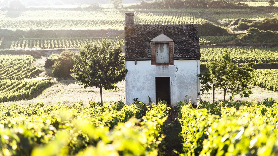 An introduction to the wine areas of France