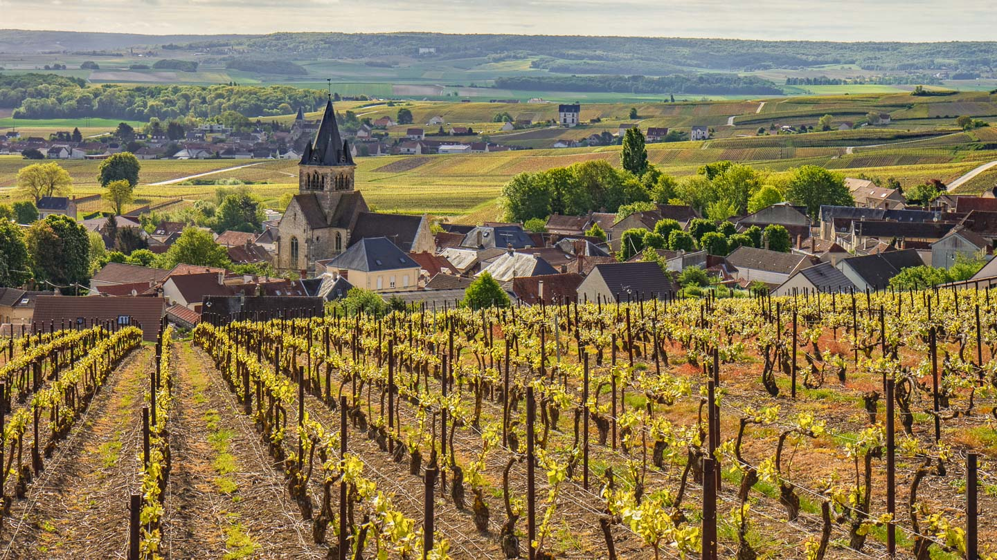 Young vineyards in the foreground of Eglise de Ville-Dommange, Champagne, France