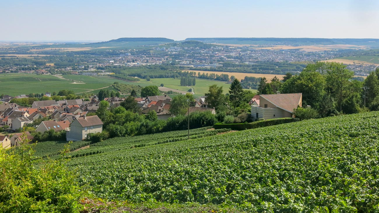 Landscape of vineyards in Champagne, France